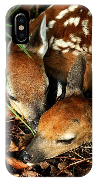 Hiding Twin Whitetail Fawns IPhone Case
