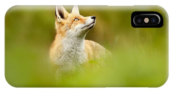 High Hopes - Red Fox Looking Up IPhone Case