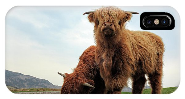 Cow iPhone X / XS Case - Highland Cow Calves by Grant Glendinning