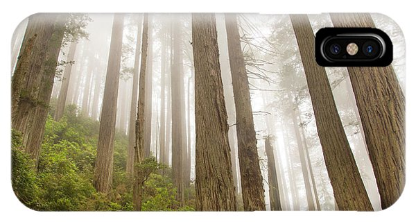 Hike Through The Redwoods IPhone Case