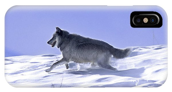 His Majesty Druid Wolf 21m IPhone Case