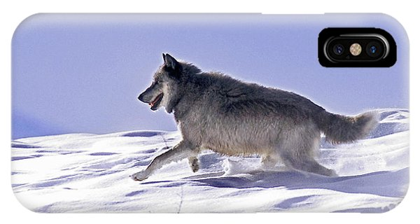 His Majesty Wolf 21m IPhone Case
