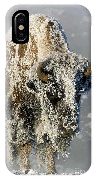 Yellowstone National Park iPhone Case - Hoarfrosted Bison In Yellowstone by Sandra Bronstein