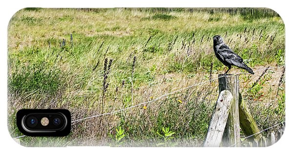 Holland Dunes - Jackdaw On A Post IPhone Case