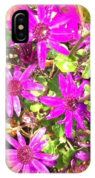 Hollywood Flower Stars IPhone Case