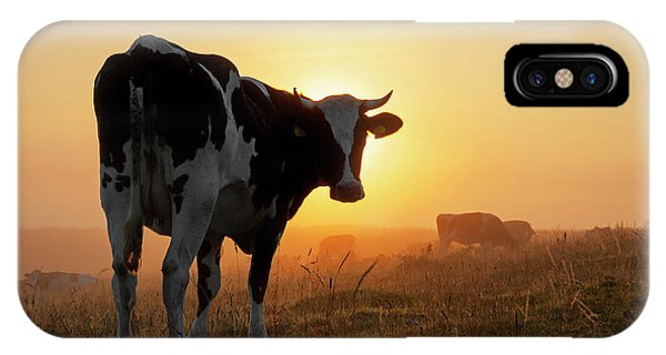Holstein Friesian Cow IPhone Case
