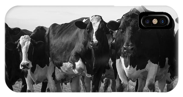 Curious Holsteins IPhone Case