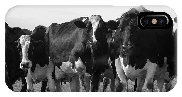 Curious Holsteins IPhone Case