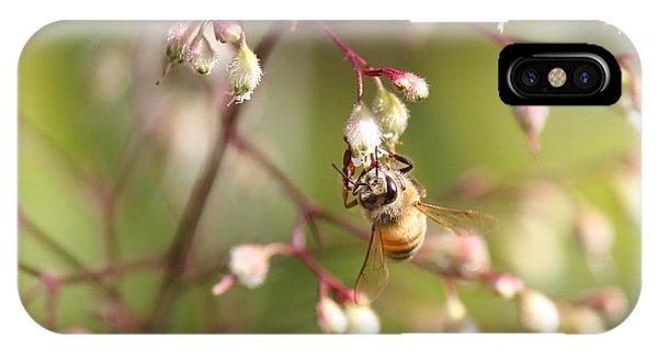 Honey Acrobat IPhone Case