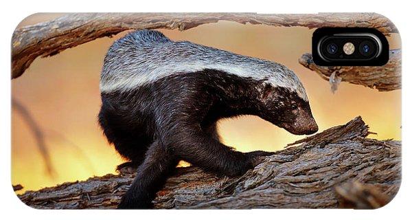 Honey Badger  IPhone Case