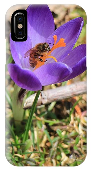 Honey Bee On Crocus  IPhone Case