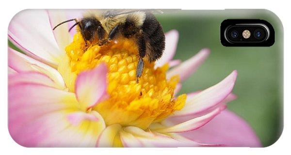 Honey Bee IPhone Case