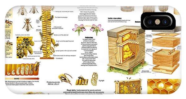 Honey Bees Infographic IPhone Case