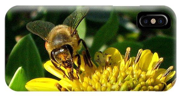 Honey Starts Here IPhone Case