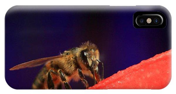 Honeybee iPhone X Case - Honeybee And Watermelon by Chris Berry