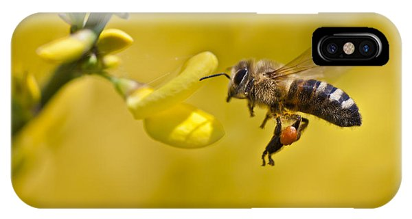 Honeybee Apis Mellifera IPhone Case
