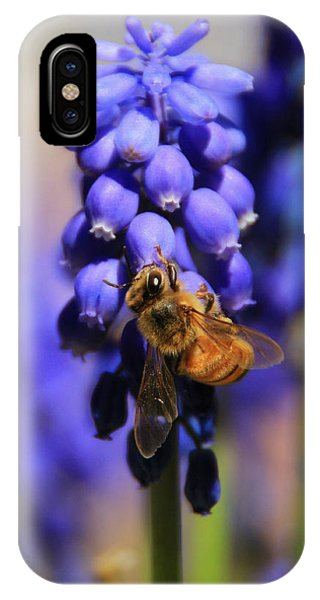 Honeybee iPhone X Case - Honeybee In A Sea Of Blue by Chris Berry