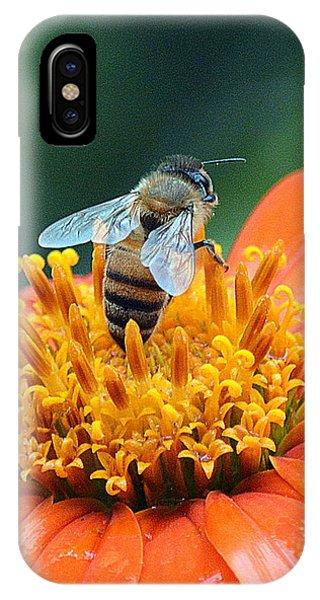 Honeybee On Orange Flower IPhone Case