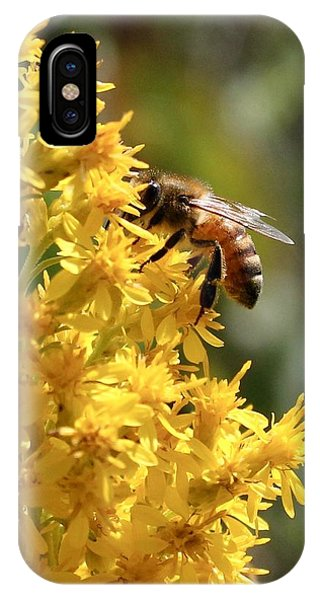 Honeybee On Showy Goldenrod IPhone Case