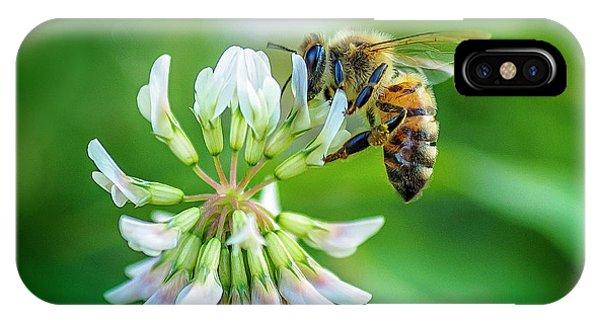 Honeybee On White Clover..... IPhone Case