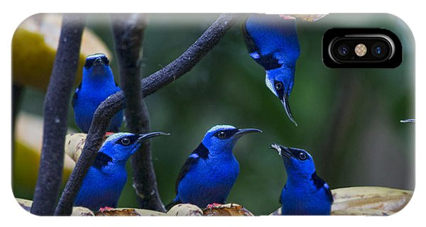 Grapefruit iPhone Case - Honeycreeper by Betsy Knapp