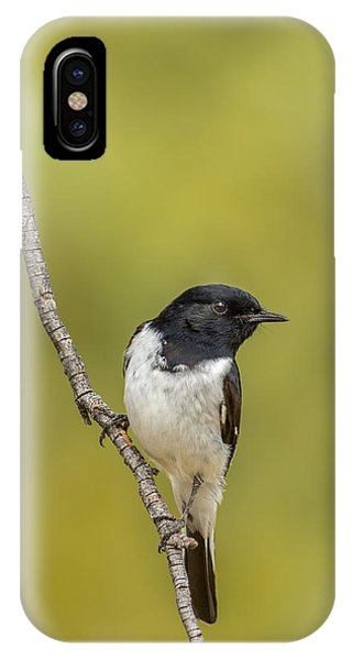 Hooded Robin IPhone Case