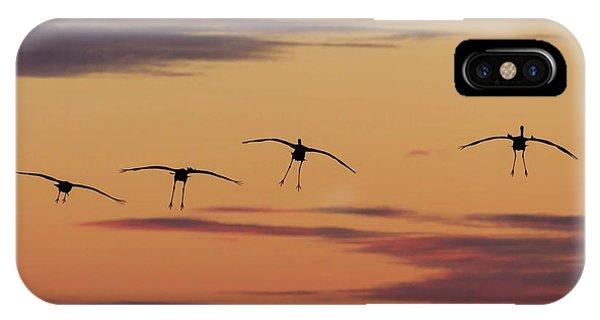 Horicon Marsh Cranes #4 IPhone Case