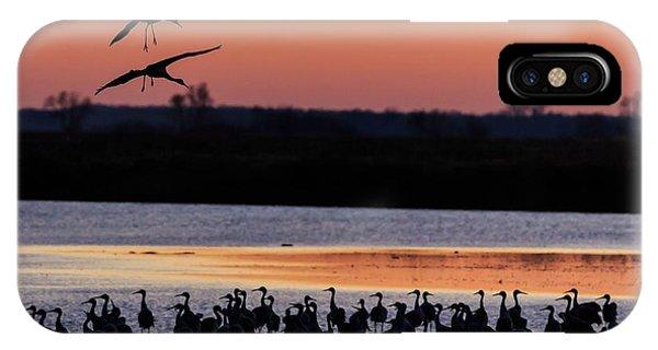Horicon Marsh iPhone Case - Horicon Marsh Cranes #5 by Paul Schultz
