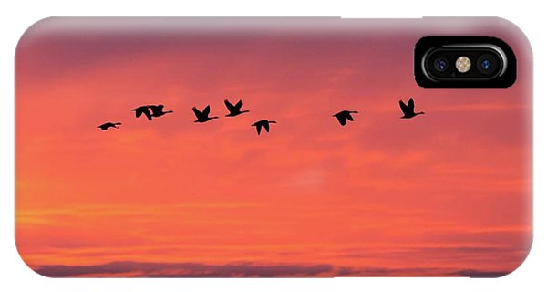 Horicon Marsh Geese IPhone Case