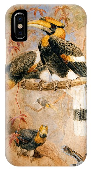Hornbill  IPhone Case