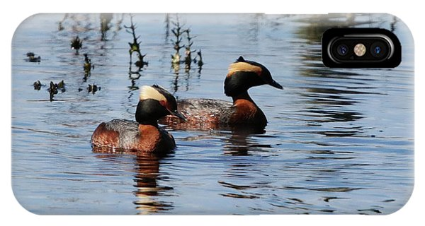 Horned Grebe Couple IPhone Case