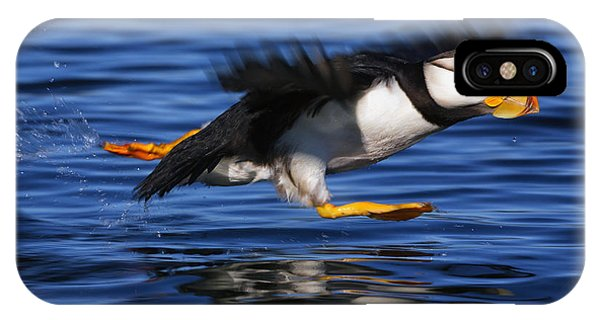 Sunny iPhone Case - Horned Puffin  Fratercula Corniculata by Marion Owen
