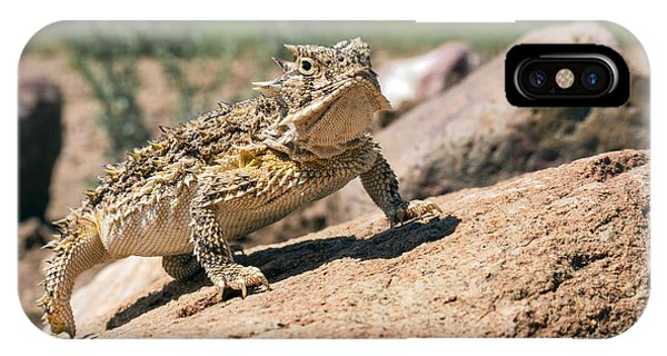 Horny Toad IPhone Case