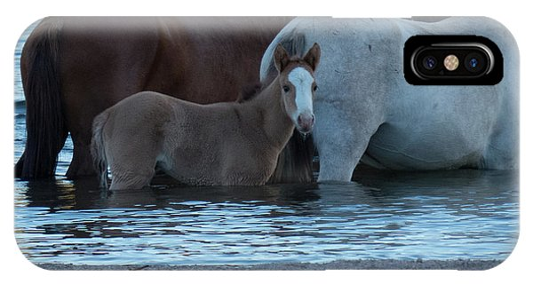 Horse 9 IPhone Case