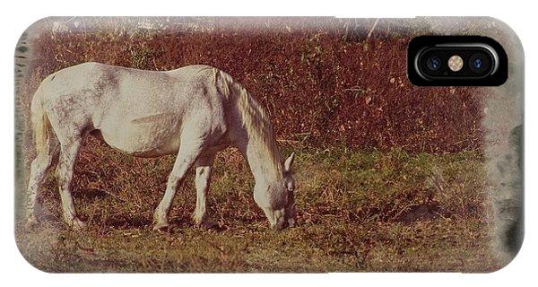 Horse Grazing IPhone Case
