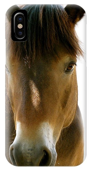 Horse Of Course IPhone Case