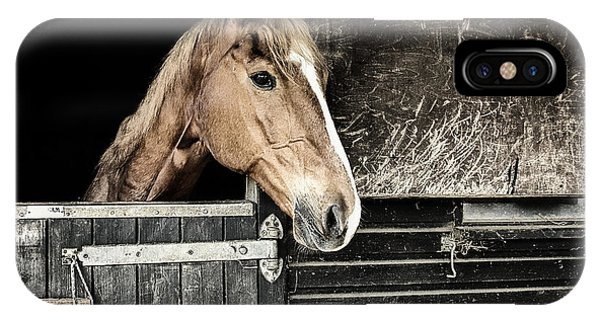 Horse Profile In The Stable IPhone Case