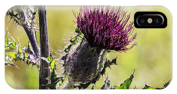 Horse Thistle 01 IPhone Case