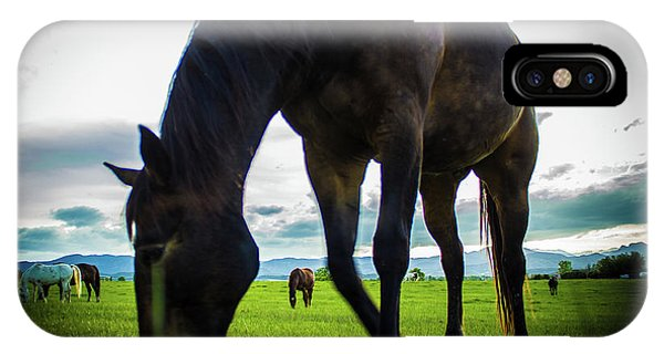 Horse Time IPhone Case