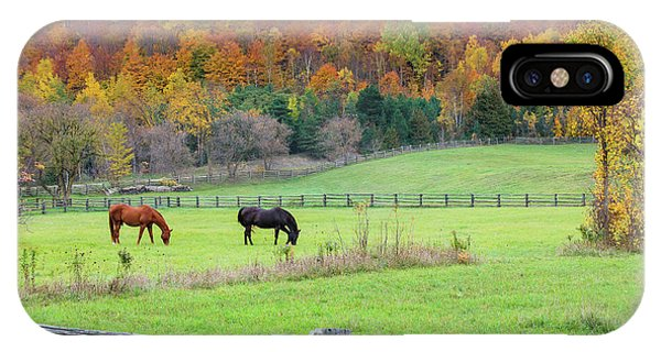 Horses Contentedly Grazing In Fall Pasture IPhone Case