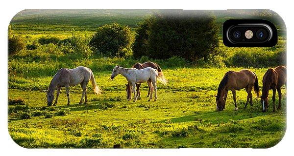 Horses Grazing In Evening Light IPhone Case