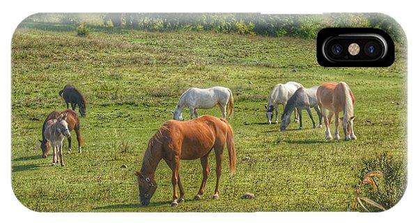 1003 - Horses In A Pasture I IPhone Case