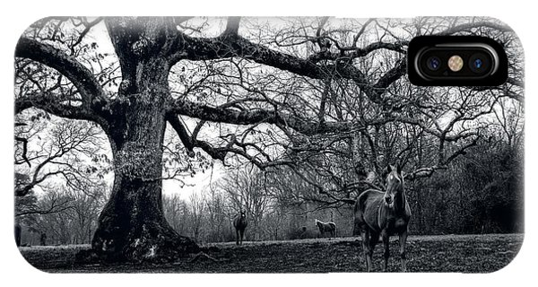 IPhone Case featuring the photograph Horses On A Foggy Morning In Black And White by Greg and Chrystal Mimbs
