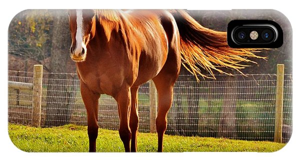 Horse's Tail IPhone Case