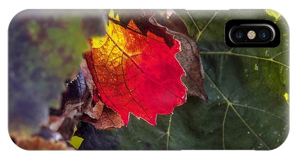 Hot Autumn Colors In The Vineyard IPhone Case