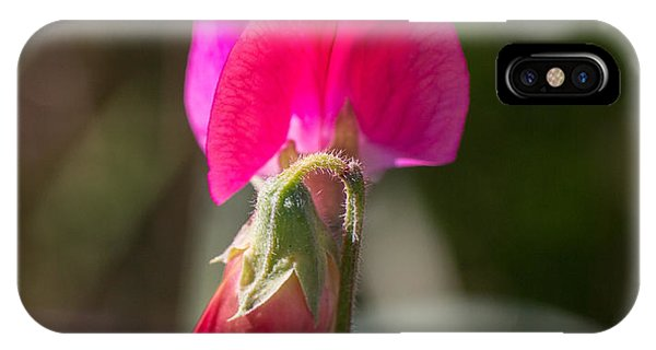 Hot Pink Sweet Pea 3361 IPhone Case