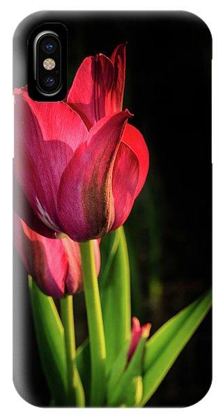 Hot Pink Tulip On Black IPhone Case