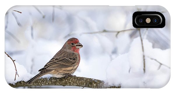 House Finch In Snow IPhone Case