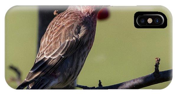 House Finch Vs Crabapple  IPhone Case