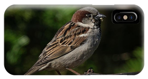 House Sparrow 2 IPhone Case